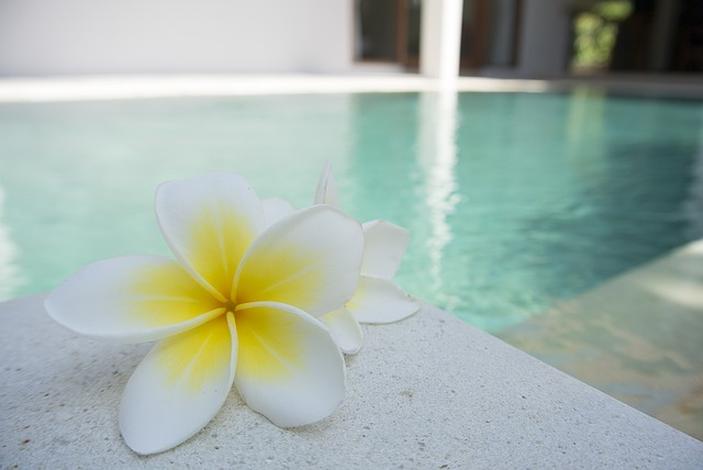 bíložluté květy