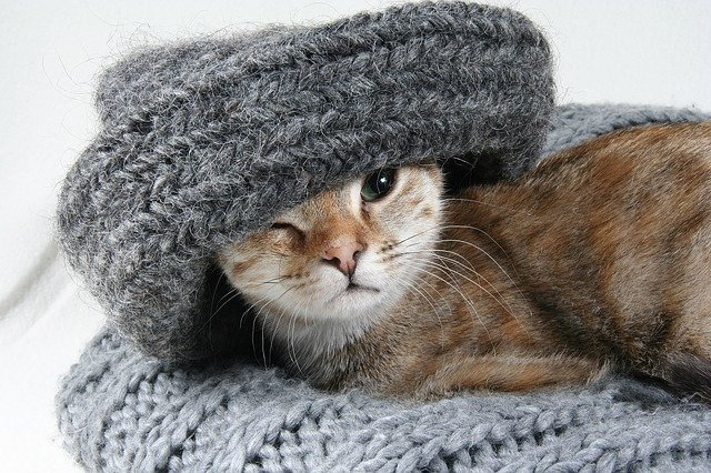 kočka v šále
